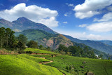 Hills and tee plantations in Kerala - 243439053