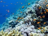 Colorful coral reef on the bottom of tropical sea, underwater landscape.