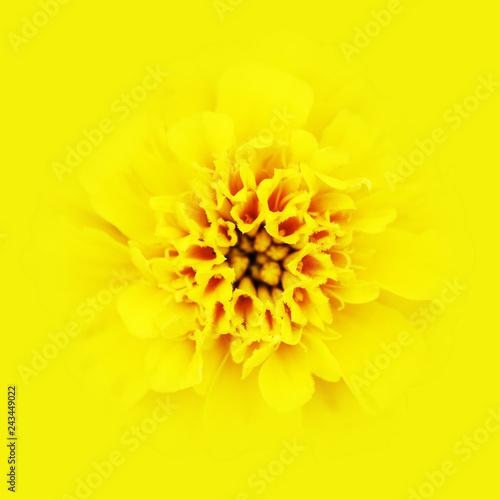 Foto Murales Head of yellow daisy.