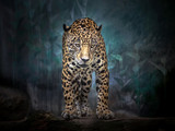 Jaguar stands in the midst of the natural forest. - 243460452