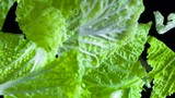 Leaves of Chinese Cabbage. Leaves Beijing cabbage fly into the air towards the camera. Filmed at a speed of 480fps - 243465652