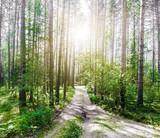 Summer road outdoor landscape - 243468247