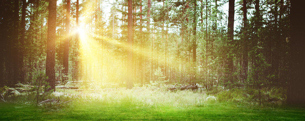 Forest sunrise landscape background morning