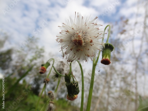 wild flower on background of blue sky - 243470400