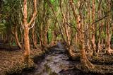 Lush mangrove forest in Thailand - 243475259