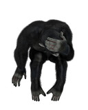 baby chimpanzee cartoon in a white background