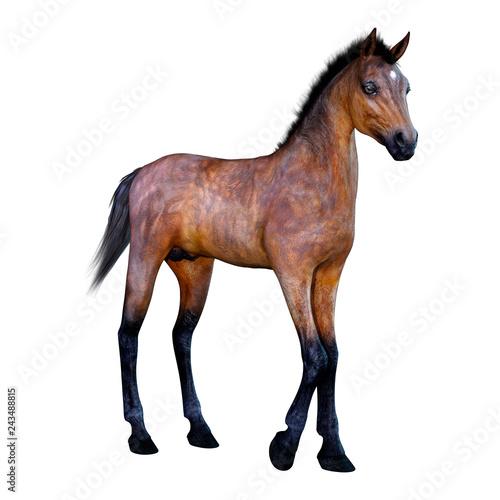 Leinwandbild Motiv 3D Rendering Horse Foal on White