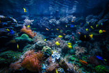 tropical Fish on a coral reef - 243514800