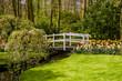 garden landscape.  garden in spring