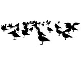 Large flock of seagulls on a white background