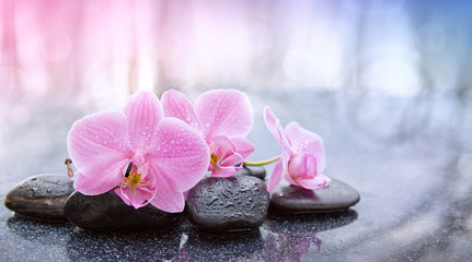 Spa background with pink orchid and black spa stones. © Swetlana Wall