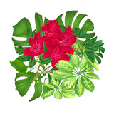 Bouquet with tropical flowers floral arrangement, with beautiful red rhododendron , Schefflera ,philodendron and ficus natural background vintage vector illustration  editable hand draw - 243551090