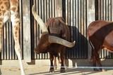 Animales en la naturaleza,mamiferos,aves y otros - 243552883