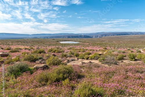 Landscape with purple wild flowers and dam near Gannaga Lodge