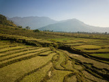 Aerial view of rural landscape in central Nepal. Paddy fields and hills in winter. - 243561693