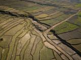 Aerial view of paddy fields in winter, Nepal - 243561896