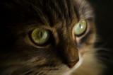 cat muzzle, face close up