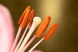 closeup of a flower stamen