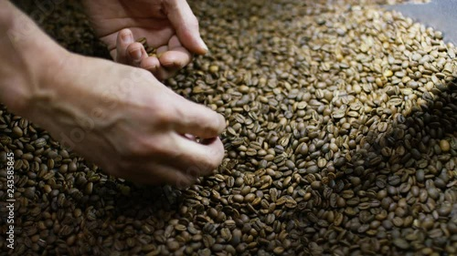 Hands of a roaster searching freshly roasted coffee beans for any defects