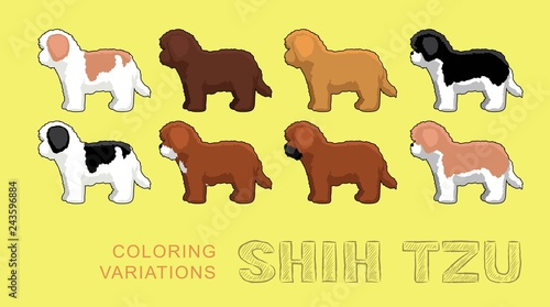 Dog Shih Tzu Coloring Variations Vector Illustration