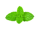 mint leaves isolated on white background - 243600692