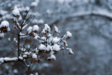 Image of small twigs under the snow. - 243605655
