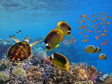 Photo of a tropical Fish on a coral reef - 243609210