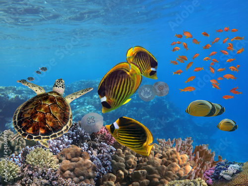 mata magnetyczna Photo of a tropical Fish on a coral reef