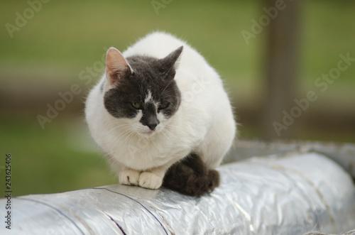 Wall mural dissatisfied homeless cat