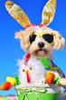 Leinwandbild Motiv funny bunny