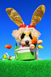 Leinwanddruck Bild - funny bunny