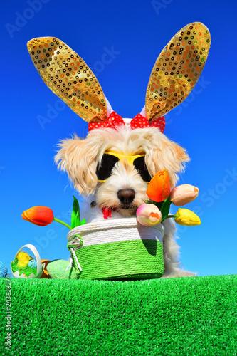 Leinwanddruck Bild funny bunny