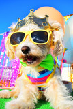 happy party dog - 243628853
