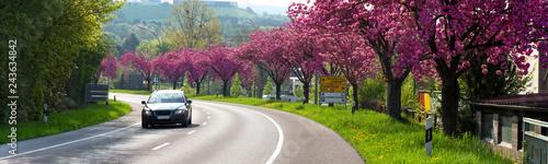 Auto, Straße, Frühling, Kirschbäume - 243634842