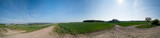 Panorama of rapeseed field and road