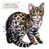 Fototapeta Koty - cat. watercolor home pet illustration. Cats breeds series. domestic animal.  © Елена Фаенкова
