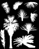 white palm trees and foliage isolated on black