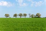 Frühling, Landschaft, blühende Bäume - 243662646