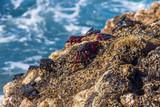 Canary islands gran canaria winter travel