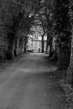 Rural path in Galicia (Spain) - 243667843