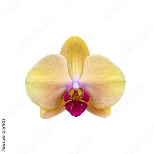 Beautiful yellow orchid flower isolated on white background with clipping path