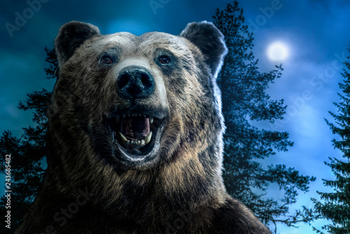 Brown grizzly bear head in the forest. A roaring bear with an open mouth. Moon light