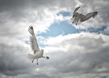 two seagull flying in the sky