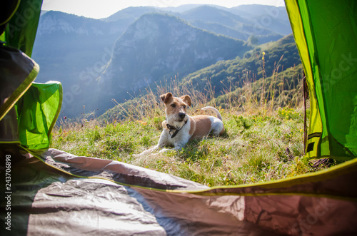 Leinwandbild Motiv camping with cute terrier dog in the mountains