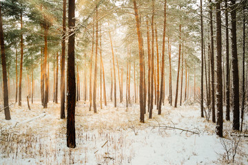 Dreamy Landscape with winter forest and bright sunbeams