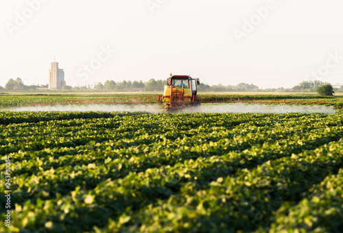 Farmer on a tractor with a sprayer makes fertilizer for young vegetable - 243710084