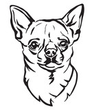 Decorative portrait of Dog Chihuahua vector illustration