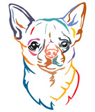 Colorful decorative portrait of Dog Chihuahua vector illustration