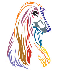 Colorful decorative portrait of Dog Afghan Hound vector illustration © alinart