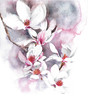 Flowers magnolia tree blossom spring blooming watercolor painting illustration isolated on white background